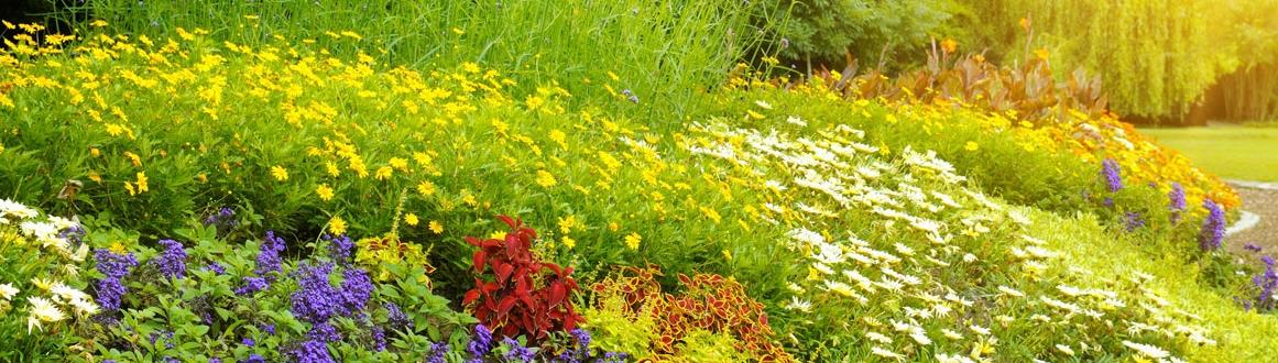 adubos para plantas